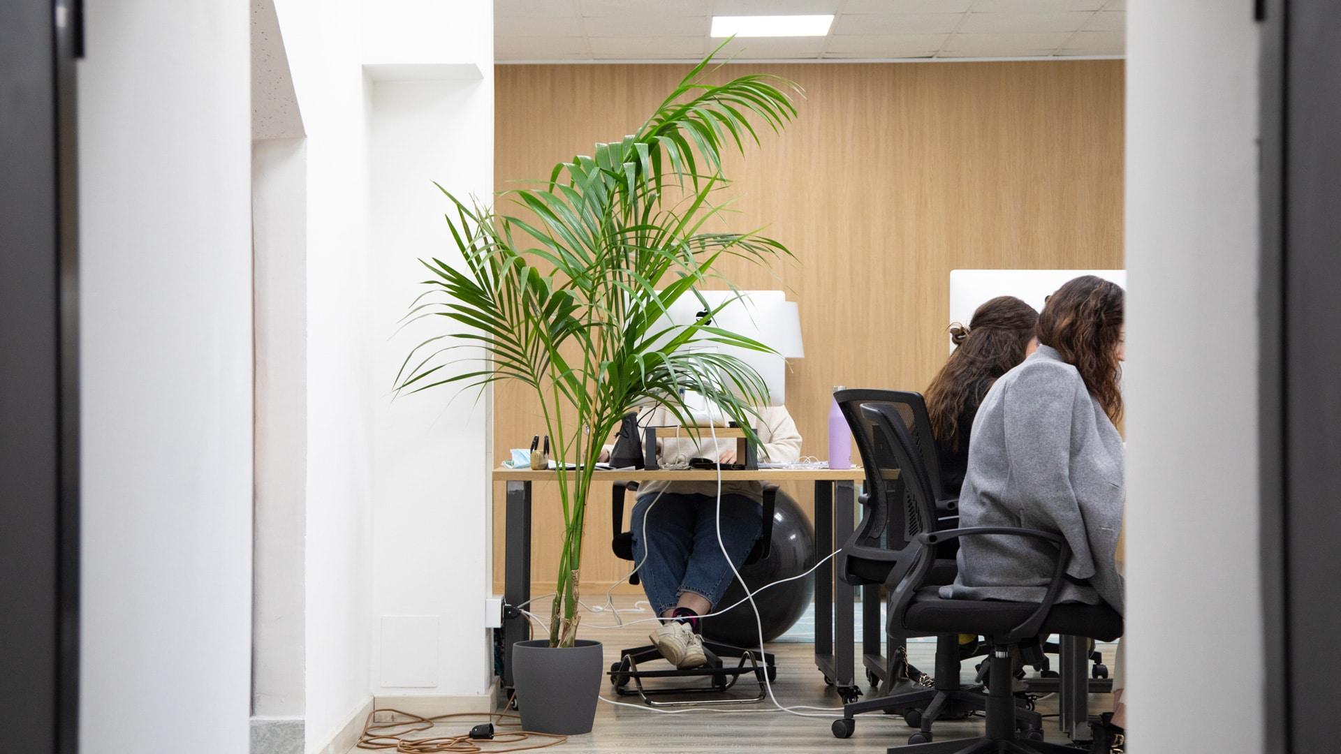 migliori piante da ufficio